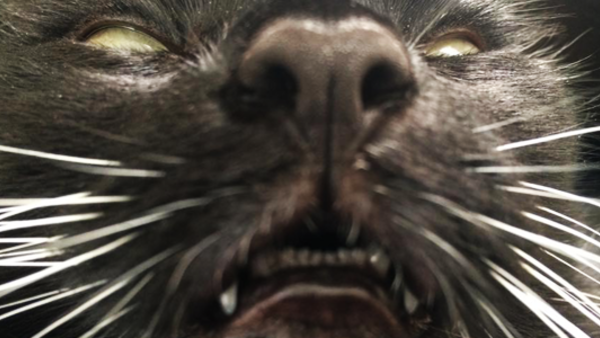 17 Signs Your Cat Is Actually Satan Himself