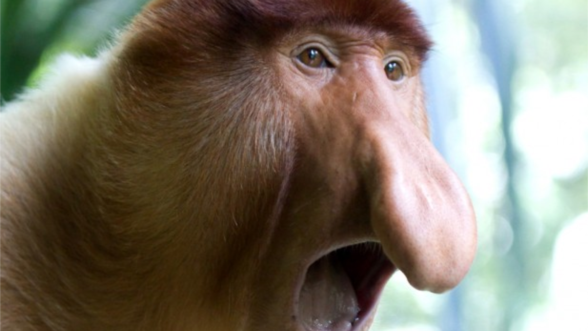 10 Ugliest Animals On The Planet – Page 5