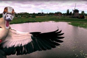 Goose attacking drone camera
