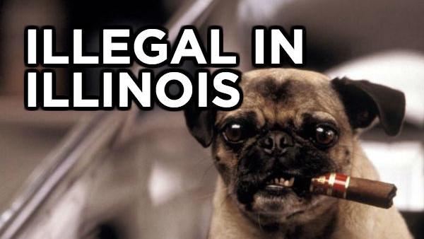 Illinois Dog Cigar