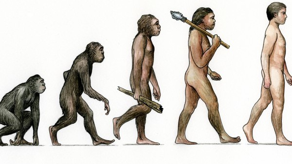 Evolution ascent of man