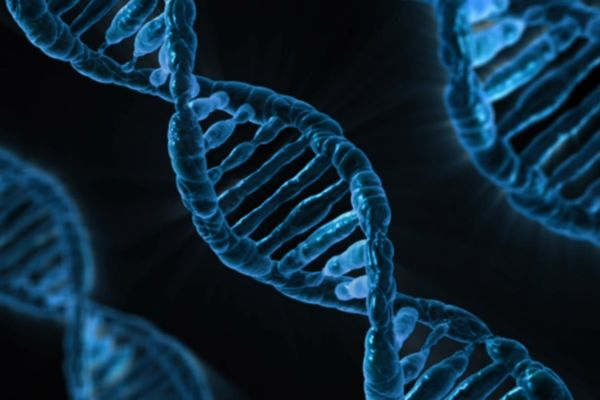 DNA genome