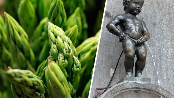 Pee Asparagus