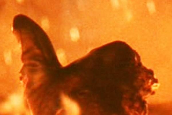 Terminator 2 Thumbs Up