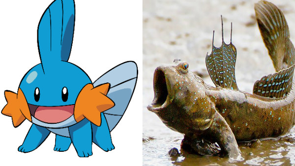 14 Pokémon Based On Bizarre Real Life Creatures Page 10