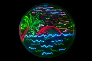 Bioart Microbes Petri Dish