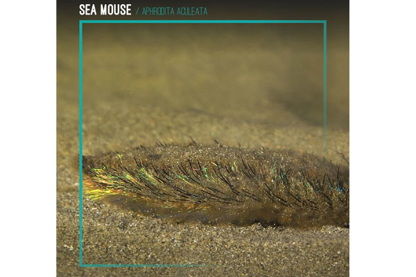 """9. """"Sea Mouse"""""""