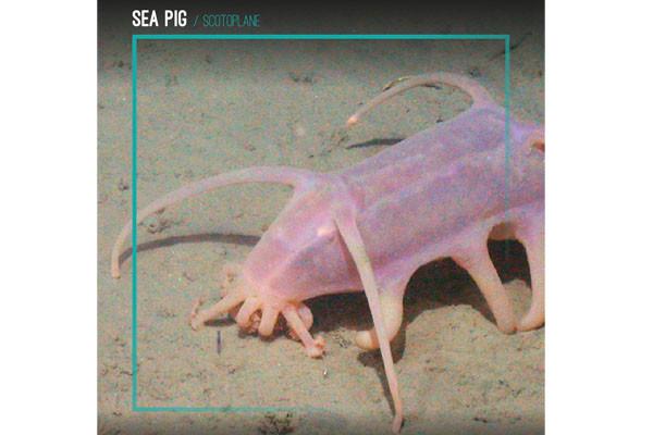 Sea Pig