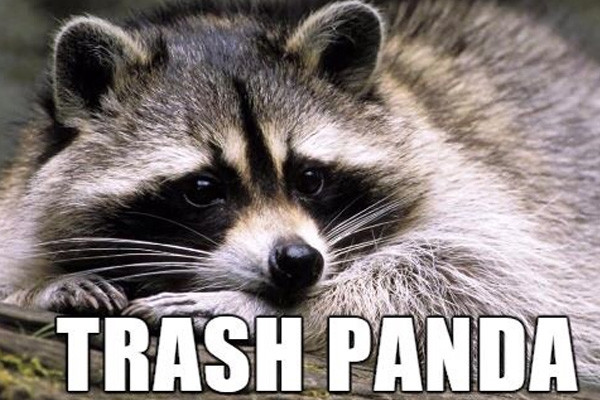 Trash Panda Meme