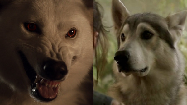 Game Of Thrones Direwolves Ghost Nymeria
