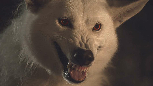 Ghost Is Returning (To Probably Die) In Game Of Thrones Season 8