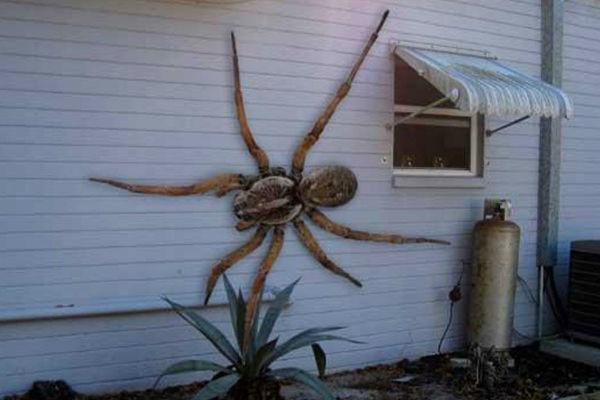 Hoax Spider