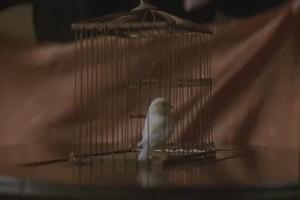 The Prestige Bird Cage Trick