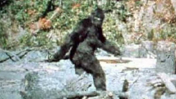 Bigfoot Film Patterson Gimlin