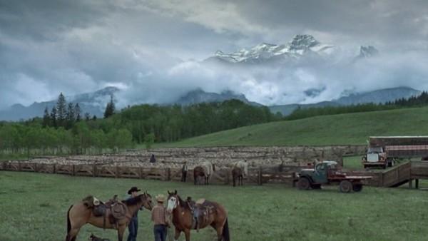 Brokeback Mountain CGI sheep