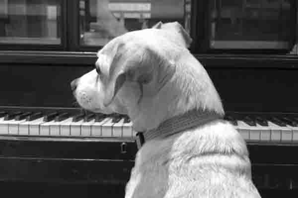 Westworld Dog