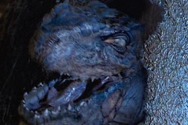 Godzilla Baby Egg