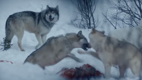 Hold The Dark - Wolves