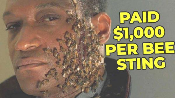 candyman bee stings