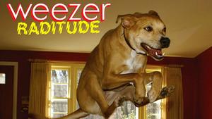 weezer raditude