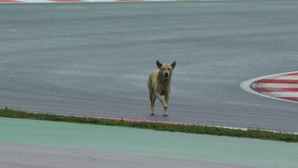 Formula 1 Turkey Dog